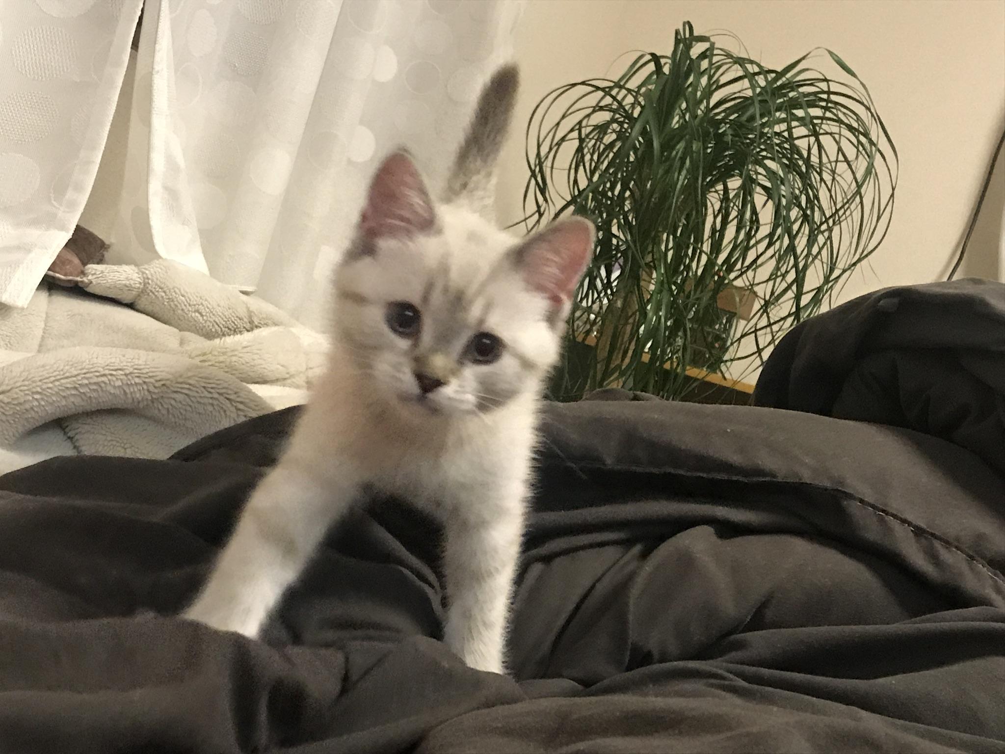 2018年は、猫のぴーにゃんが家族になりました!